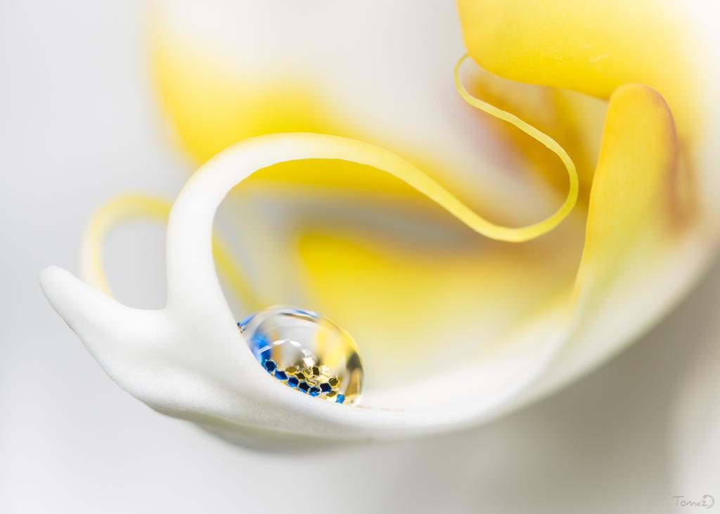 Orchidaceae III by TomazKlemensak