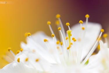 Spring by TomazKlemensak