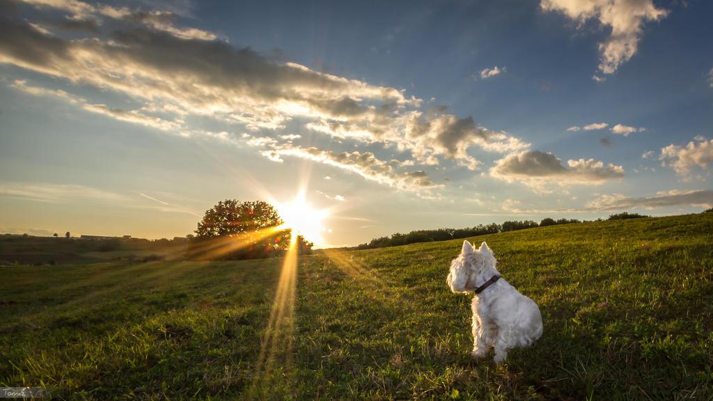 Image Result For Nature Dog Natural