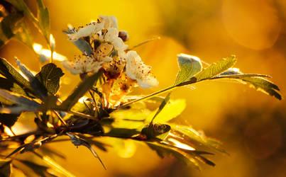 springtime by specyficzniee147