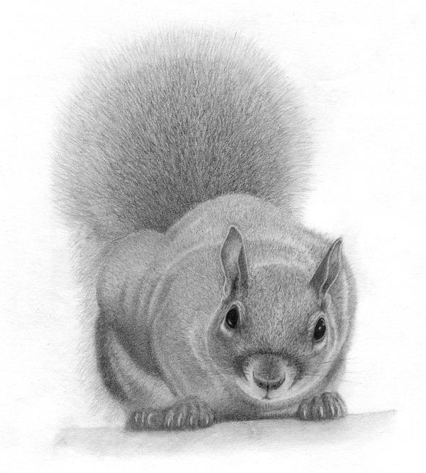 squirrel sketch by etaludom on DeviantArt