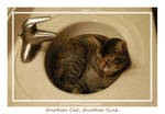Another Cat, Another Sink