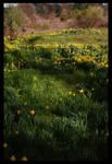 Field of flowers stock