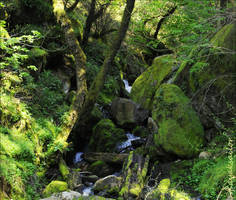 Hidden stream by kayaksailor