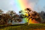Sony Rainbow Oak by kayaksailor