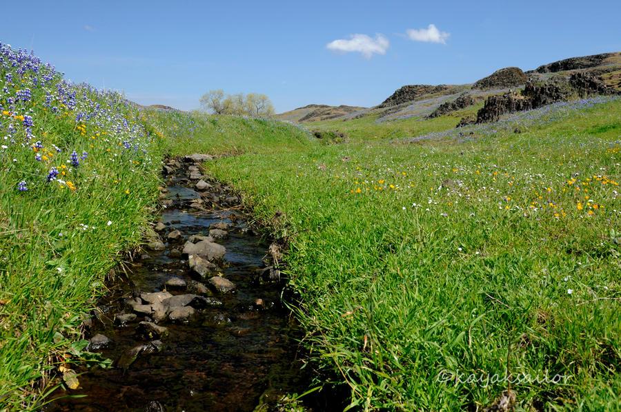 Wildflower creek wallpaper by kayaksailor