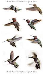 Hummingbird poses stock by kayaksailor