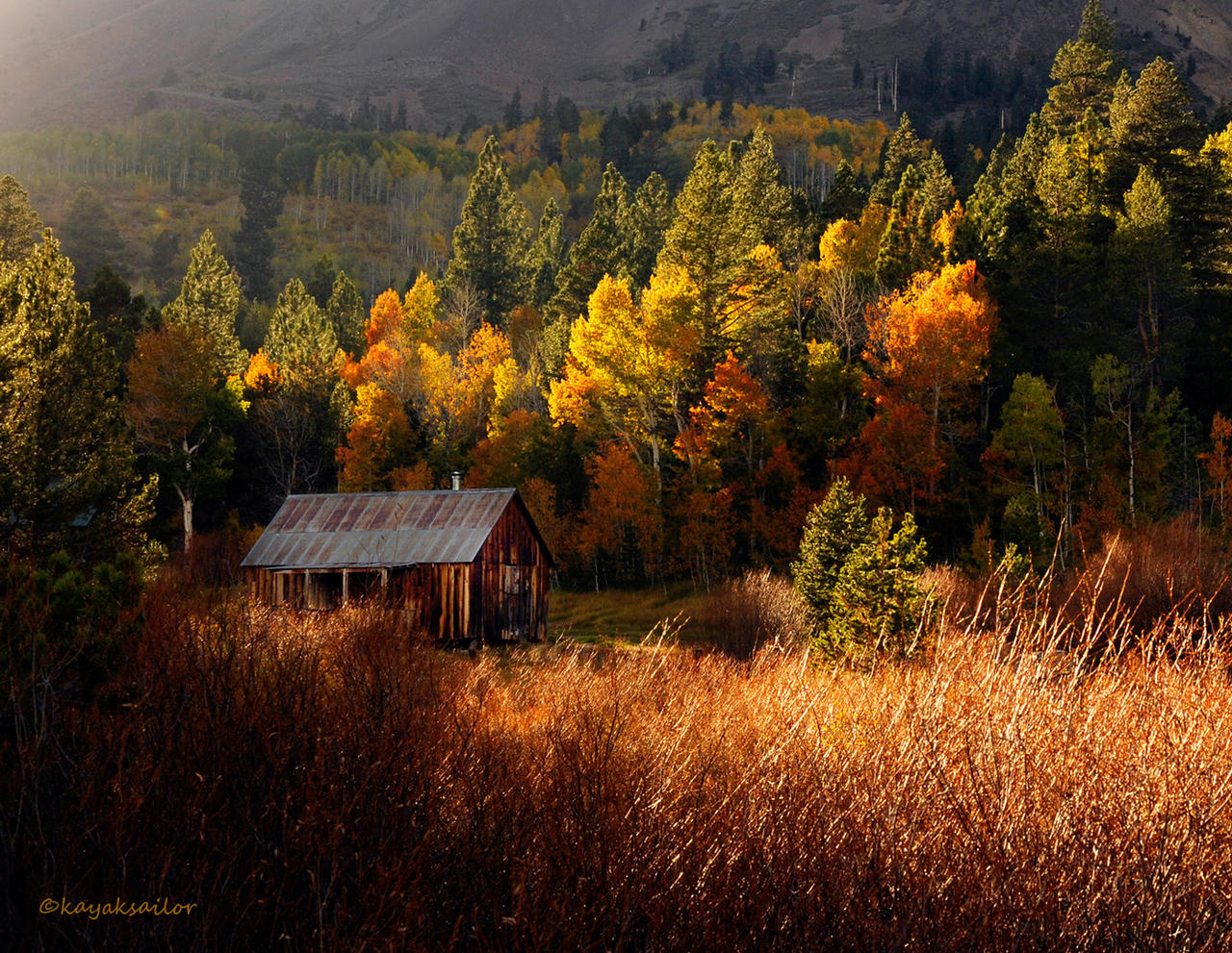 Cabin in the woods by kayaksailor