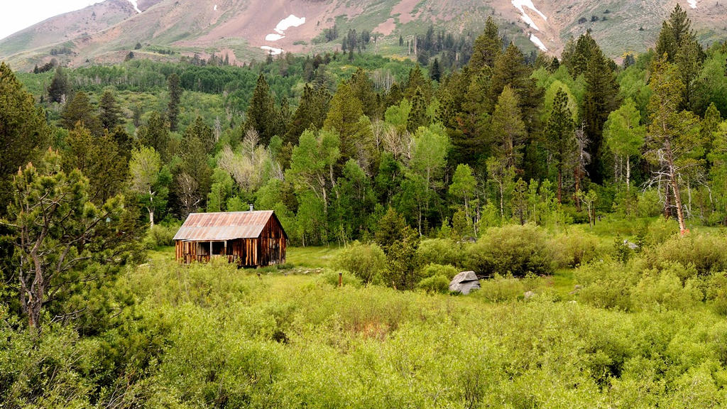 Cabin dressed in green by kayaksailor