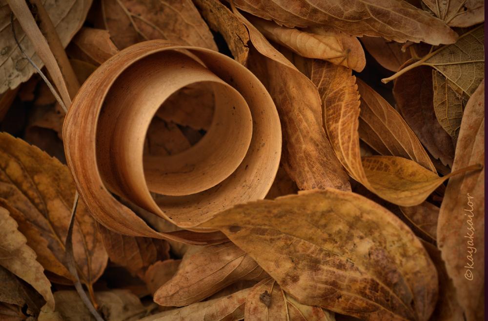 Leaf litter by kayaksailor