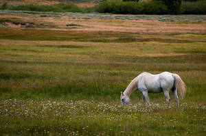Peaceful grazing by kayaksailor