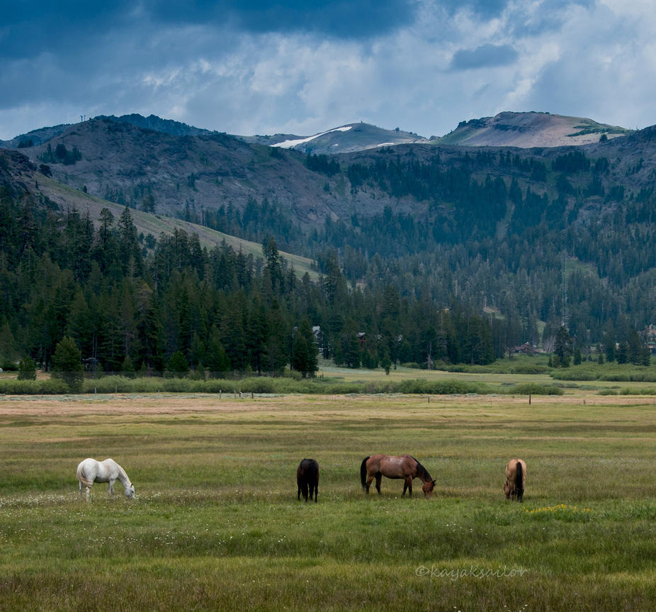 Mountain ponies by kayaksailor