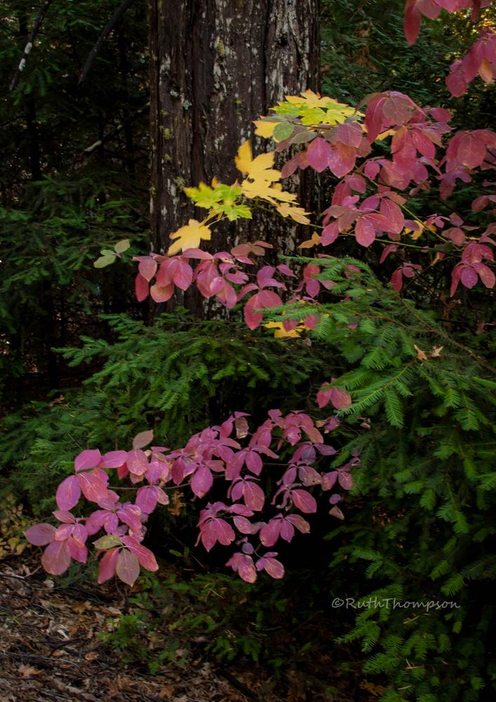 California Autumn color by kayaksailor