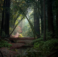 Portal through the trees