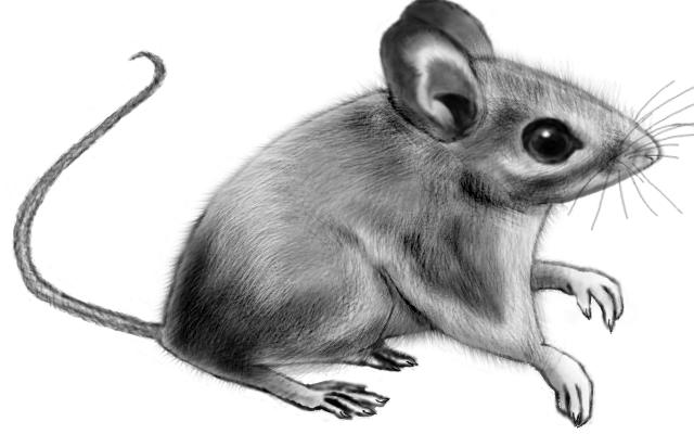 Peromyscus by LittleMonster-Evfan