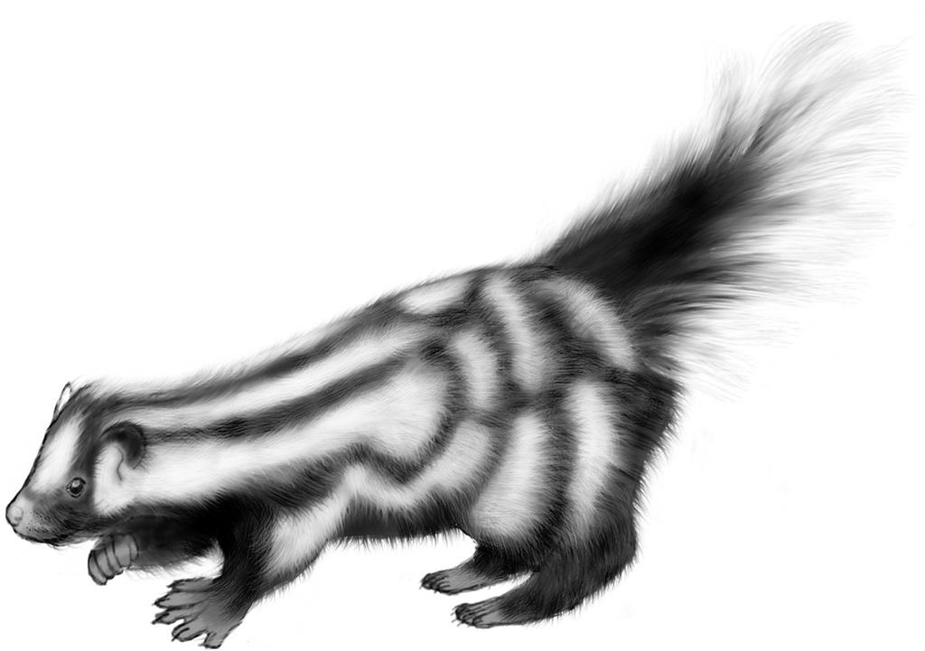 Spilogale gracilis by LittleMonster-Evfan