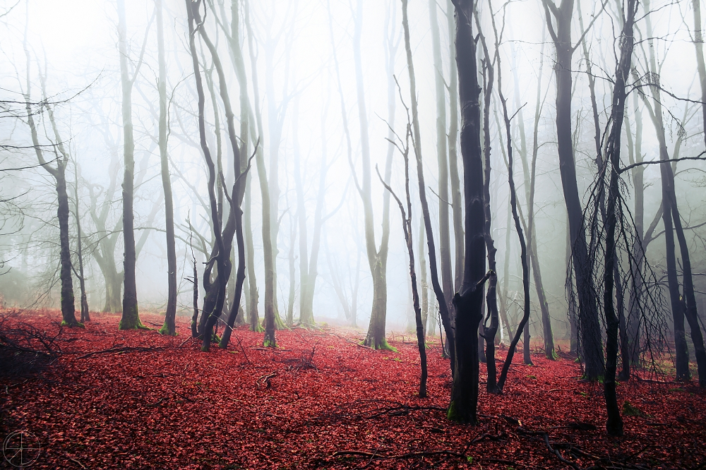 a mist arose by RonnyEngelmann