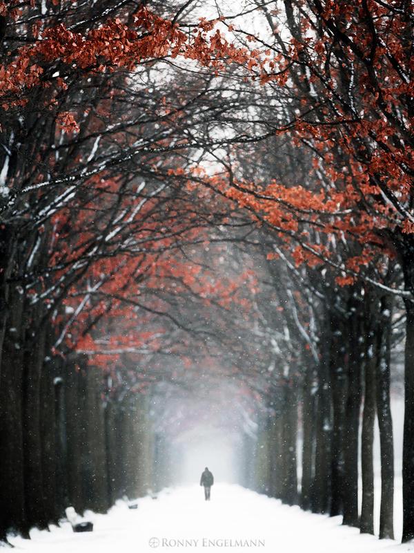 Autumn in Winter by RonnyEngelmann