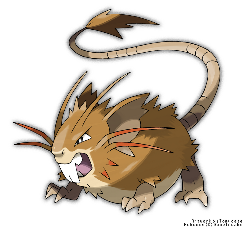 Raticate Pokemon