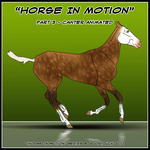 Horse In Motion - Canter by CKR-DK