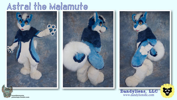 Astral the Malamute