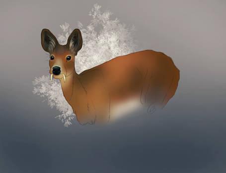 Deercember #12 - Chinese water deer