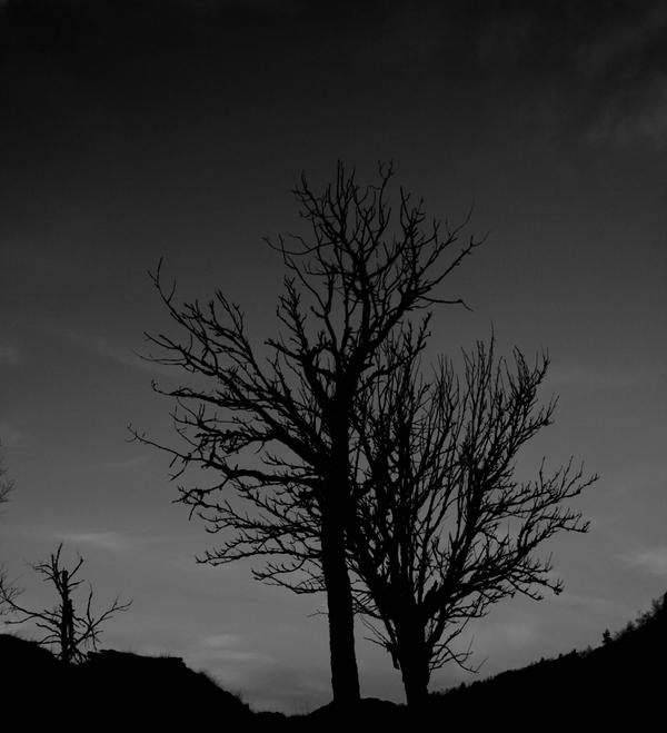 Dark Trees by thegoggel