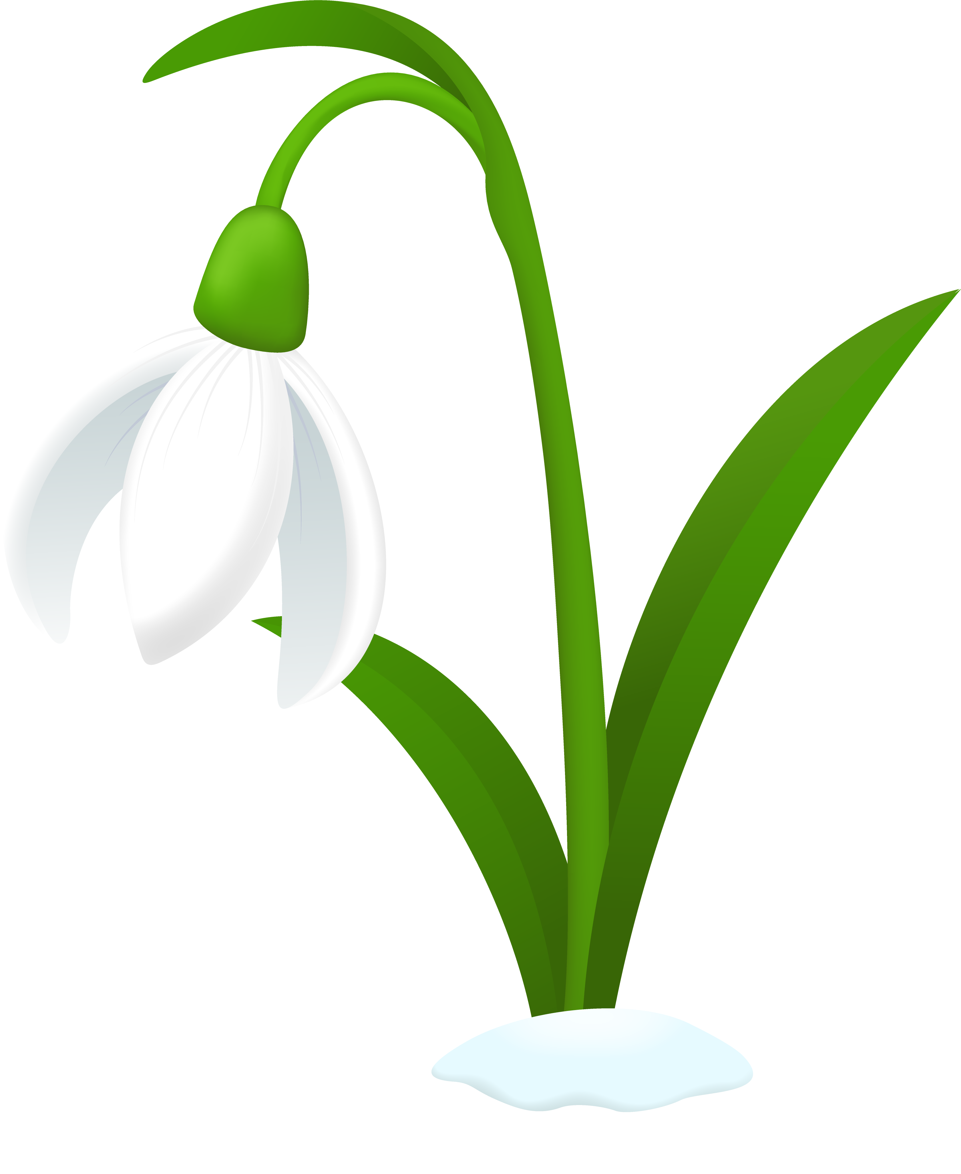 Snowdrop flower by TechRainbow on DeviantArt
