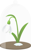 Snowdrop flower protected