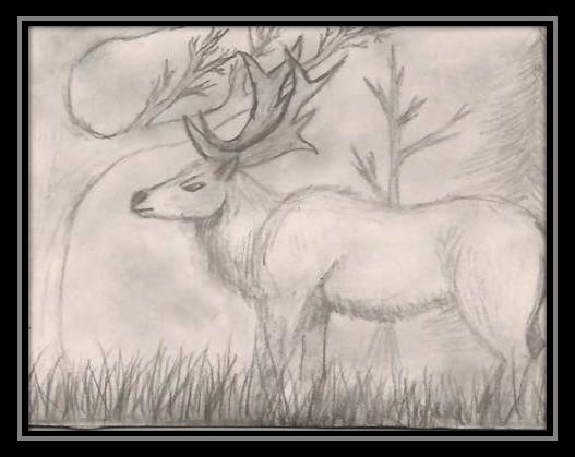 Elk by Saiyasama