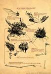 Hongo de Yuggoth/ Fungi of Yuggoth
