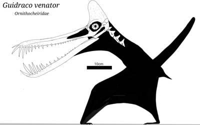 Guidraco Skeletal Schematic by SassyPaleoNerd