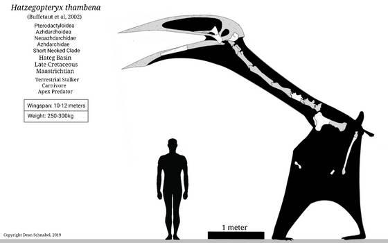 Hatzegopteryx Skeletal