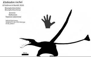 Klobiodon skeletal