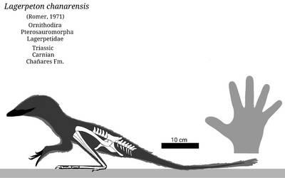 Lagerpeton Skeletal