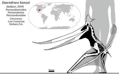 Dawndraco Skeletal