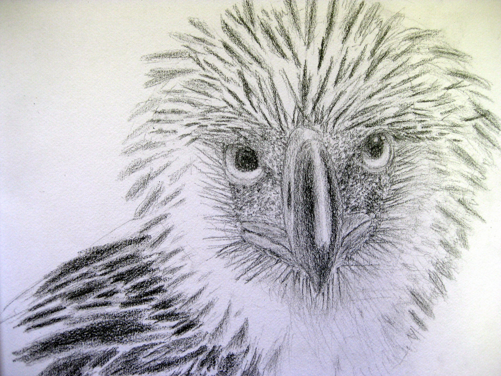 Philippine Eagle by alphabetsoup314 on DeviantArt