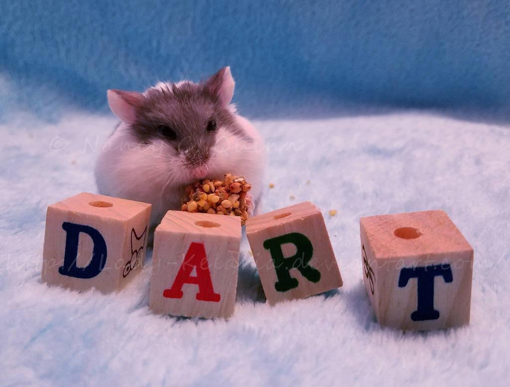 Dart's Thanksgiving Feast