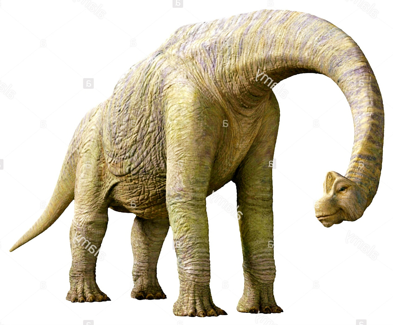 Baylene the Brachiosaurus by QWoodLand on DeviantArt