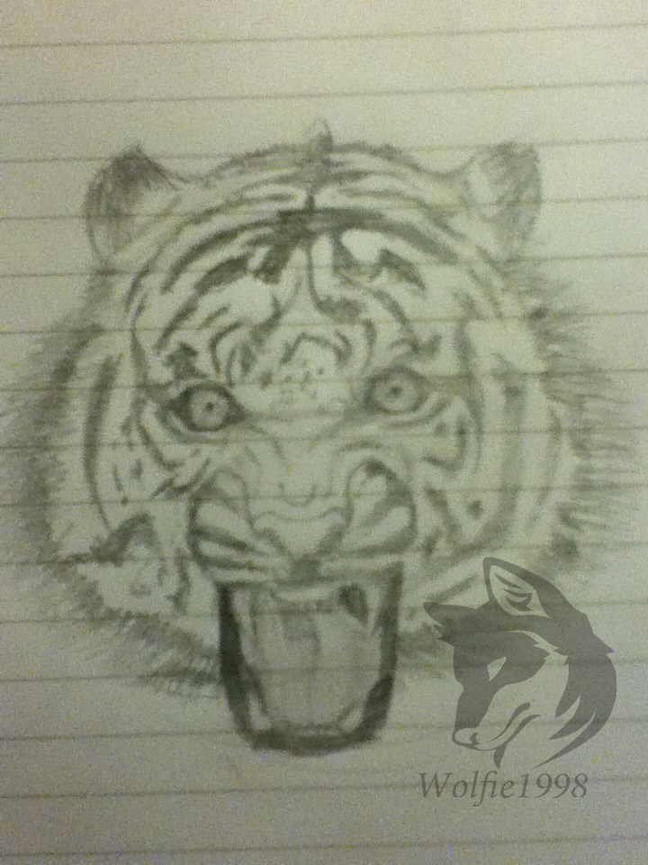 Tiger by wolfie1998