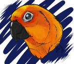 Jak the Jenday Conure