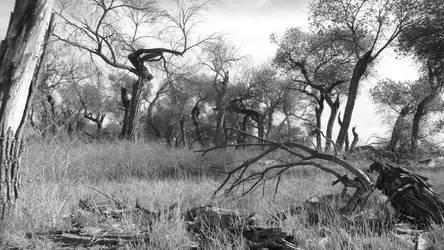 Back Woods by Serioskrt