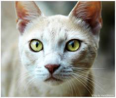 Kitty by MarkSheinin