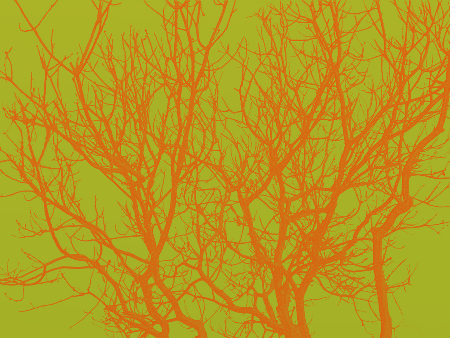 Branches - Orange with Green by Emily848