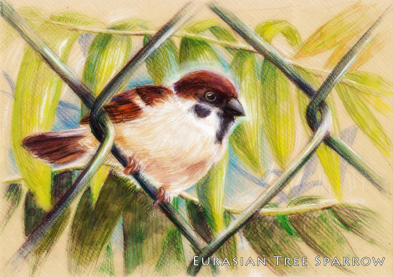 Eurasian Tree Sparrow by liyaperfidious
