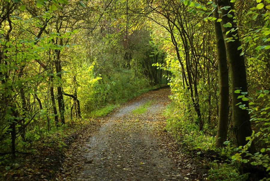 Green path by MurphyL6