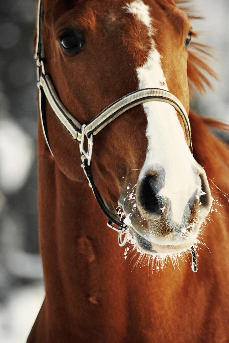 Horse portrait by MurphyL6