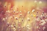 Fairytale meadow