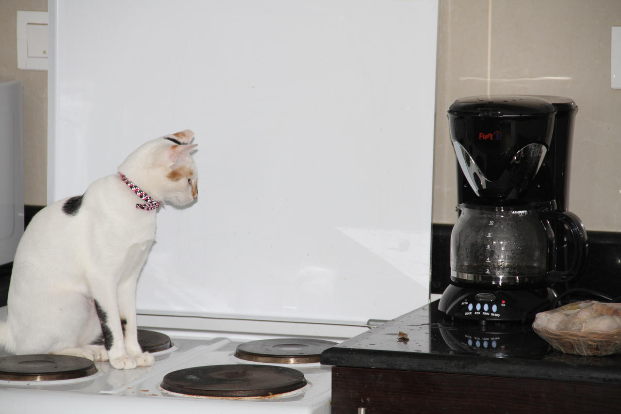 Waiting for the coffee to brew