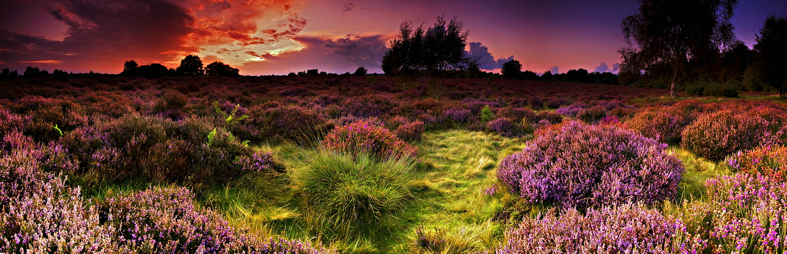 Dunwich Heath. by Wayne4585